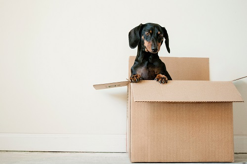 I have just moved house again!